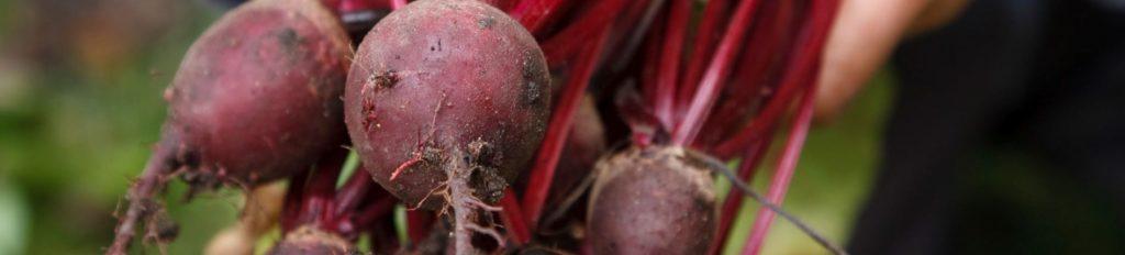 Primary school incursions 5 veg 2 fruit